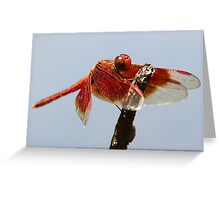 Litchfield park dragonfly Greeting Card