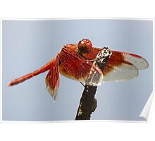 Litchfield park dragonfly Poster