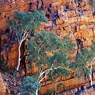 Gums on Ochre by Harry Oldmeadow