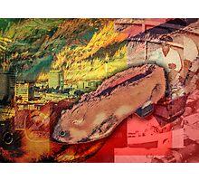 Czech Hamster Shoe Photographic Print