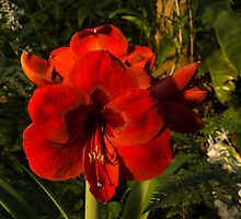 Red Velvet in the Garden by Georgia Mizuleva