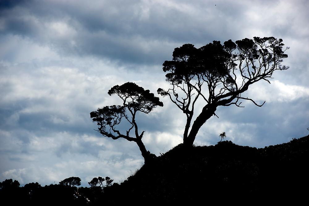 Pohutakawa Tree - NZ by Jenny Dean