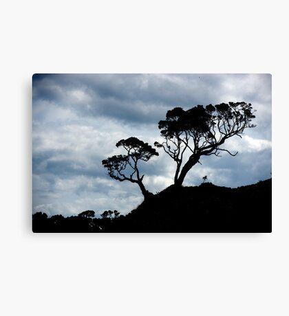 Pohutakawa Tree - NZ Canvas Print