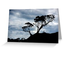 Pohutakawa Tree - NZ Greeting Card