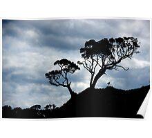 Pohutakawa Tree - NZ Poster