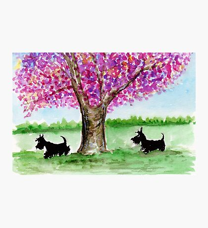 Two Scottie Dogs Photographic Print