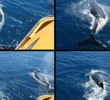 Humpback Whale Calf Collage 1 Sticker