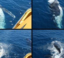 Humpback Whale Calf Collage 2 Sticker