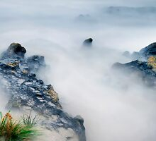 Nelson Bay North/West Tasmania by Angelika  Vogel