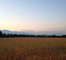 Barley field by Enrico Artuso