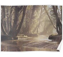 Misty by the River in the Forest. Poster