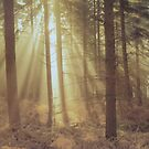 Sunlight through the trees. by Edward Denyer