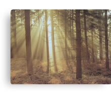 Sunlight through the trees. Canvas Print