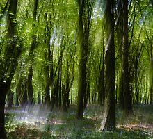 Mystical Bluebell Wood by Heidi Stewart