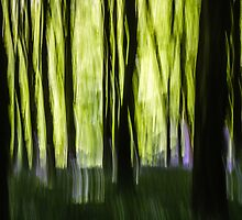 Abstract Woodland by Heidi Stewart