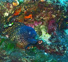 Underwater by Victor Micallef