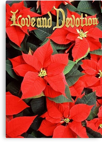 Love and Devotion Poinsettia Christmas Greeting by taiche