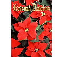 Love and Devotion Poinsettia Christmas Greeting Photographic Print