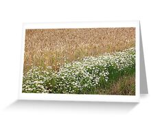 Wheat and Daisies  Greeting Card