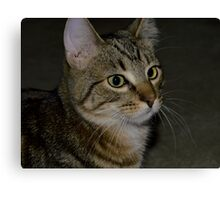 Max Kitten Portrait Canvas Print