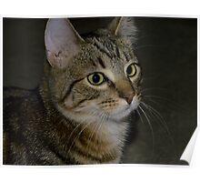 Max Kitten Portrait Poster