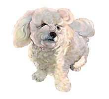 "A beautiful Bichon named ""Coconut"" by Jane Oriel"