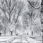 Snow's path down Comm Ave by Owed to Nature