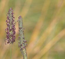 Purple Pollen by Kathi Arnell