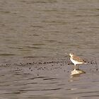 Wader by Kathi Arnell