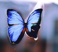 Butterfly by Isabella Madrid
