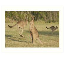 Kangaroo 2 Art Print