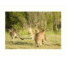 Kangaroo 5 Art Print