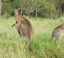 Kangaroos 6 by Gotcha29