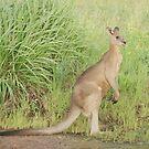 Kangaroos 7 by Gotcha29