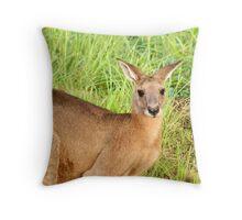 Kangaroo 8 Throw Pillow