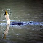 Pacific White-necked heron taking a bath by nadine henley