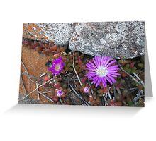 Flinders Island 1 Greeting Card