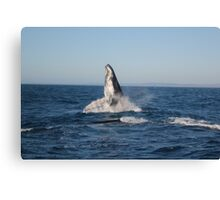 Graceful Giants of the Deep Canvas Print