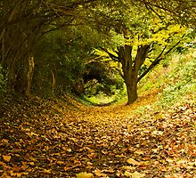 Autumn tunnel by Chris Martin