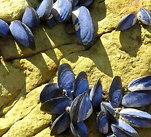 Mussels by Anthony Woolley