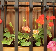 Malta flower balcony by Dansam1