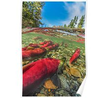 Upstream - Salmon run Poster