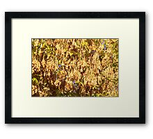 Maplecopters Framed Print