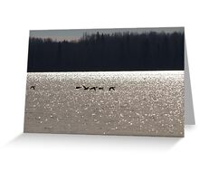 Glistening Waters Greeting Card