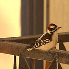 Downy Woodpecker 1 by Kathi Arnell