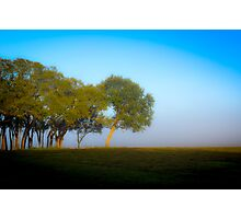 Foggy background of a tree Photographic Print