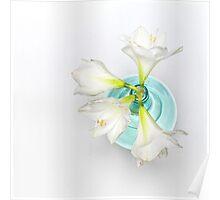 Wonderful white Amaryllis... Poster