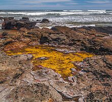 Rockpool. by Bette Devine
