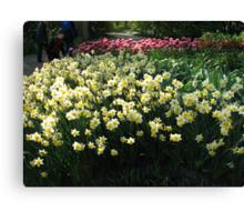 Keukenhof Daffodils Canvas Print