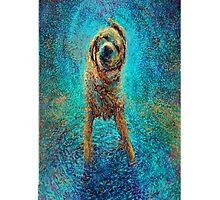 Blue dog  Photographic Print